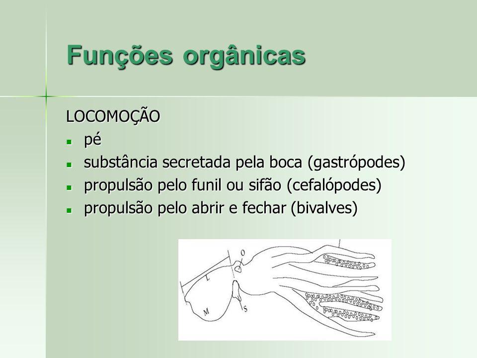 Funções orgânicas LOCOMOÇÃO pé