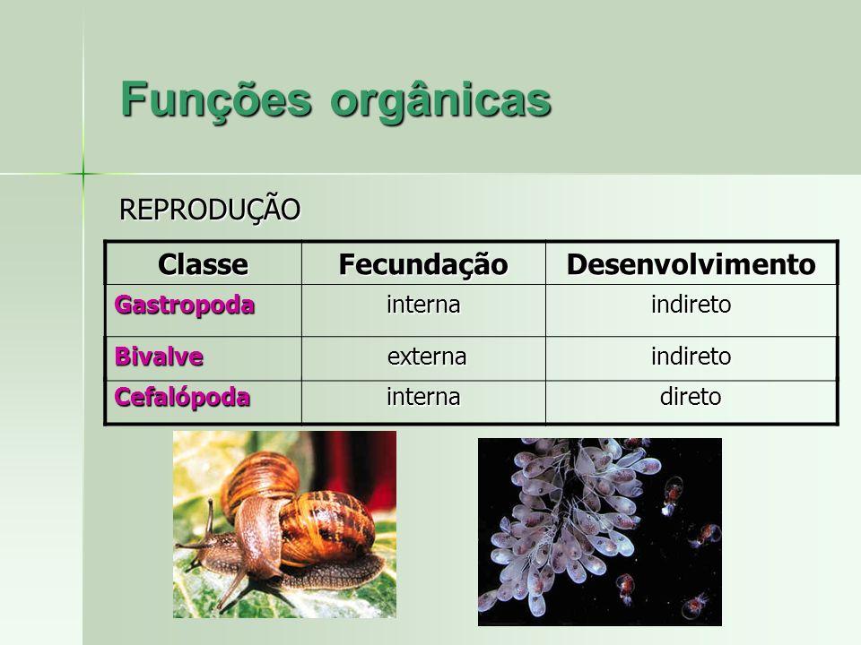 Funções orgânicas REPRODUÇÃO Classe Fecundação Desenvolvimento
