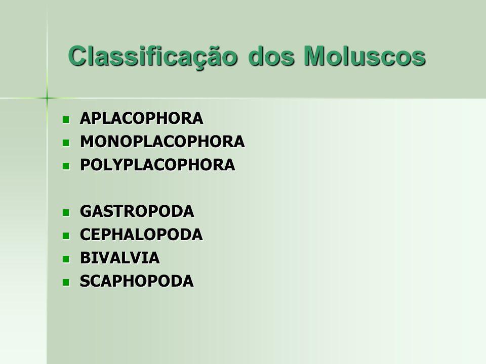 Classificação dos Moluscos