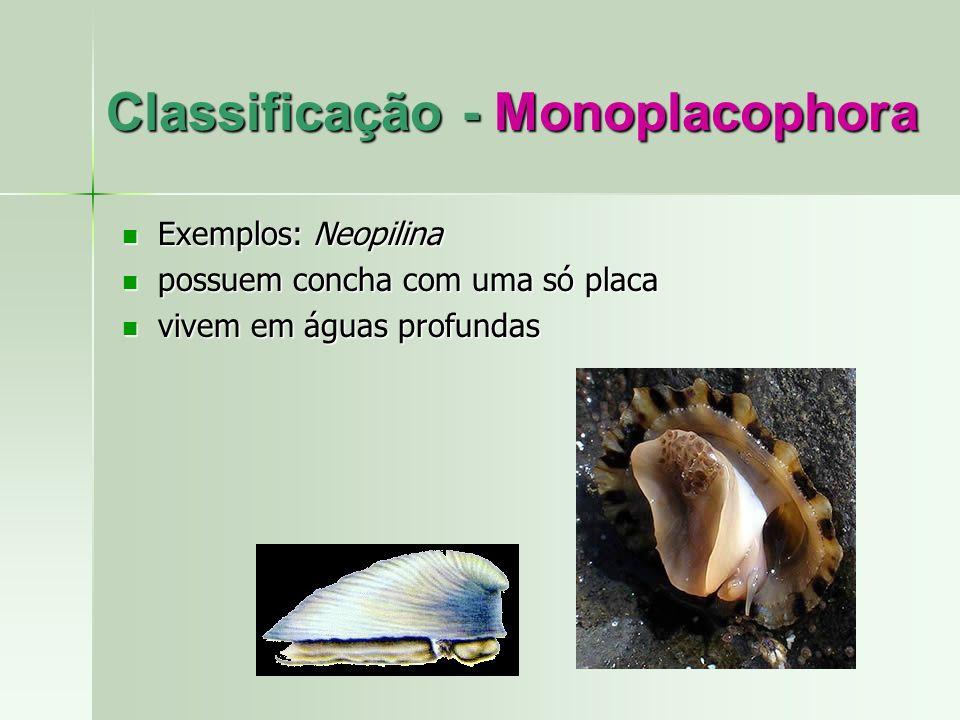 Classificação - Monoplacophora