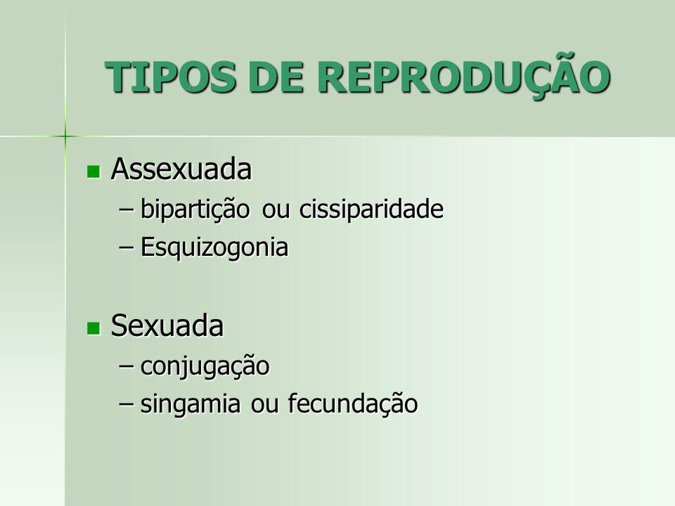 TIPOS DE REPRODUÇÃO Assexuada Sexuada bipartição ou cissiparidade