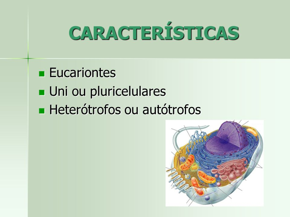 CARACTERÍSTICAS Eucariontes Uni ou pluricelulares