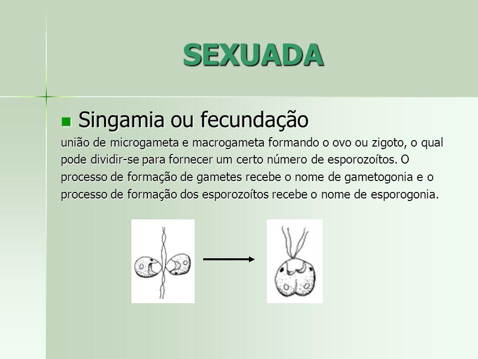 SEXUADA Singamia ou fecundação