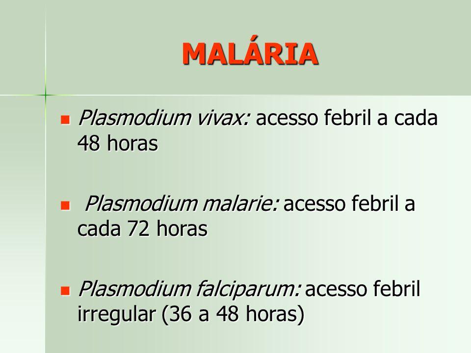 MALÁRIA Plasmodium vivax: acesso febril a cada 48 horas