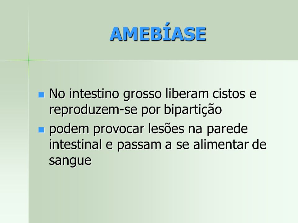 AMEBÍASE No intestino grosso liberam cistos e reproduzem-se por bipartição.