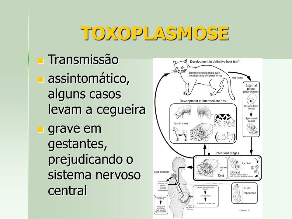 TOXOPLASMOSE Transmissão assintomático, alguns casos levam a cegueira