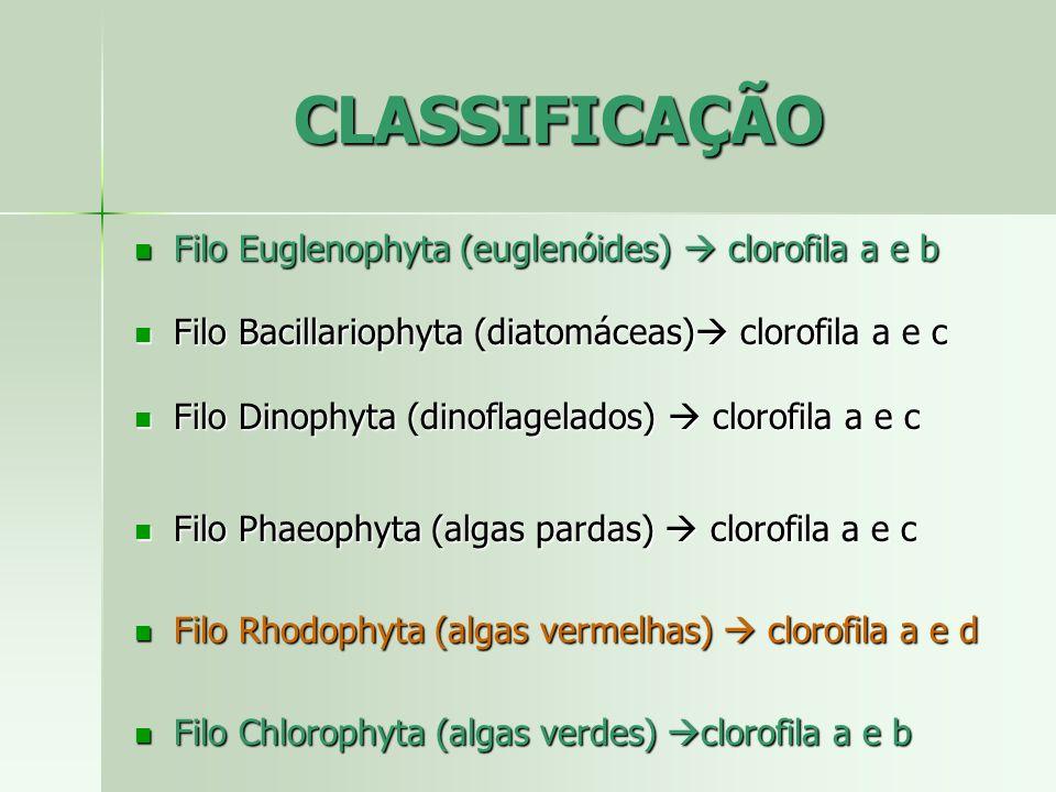 CLASSIFICAÇÃO Filo Euglenophyta (euglenóides)  clorofila a e b