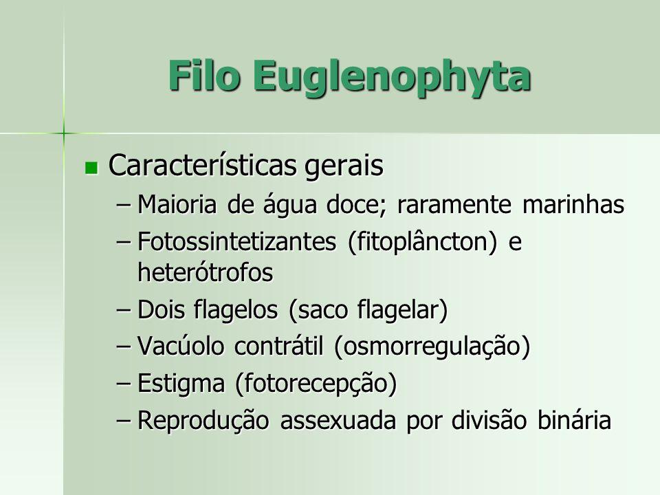 Filo Euglenophyta Características gerais