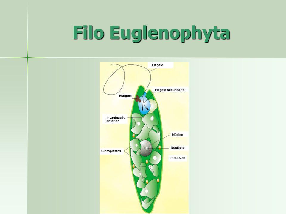 Filo Euglenophyta