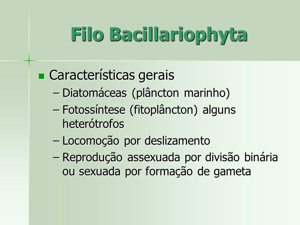 Filo Bacillariophyta Características gerais