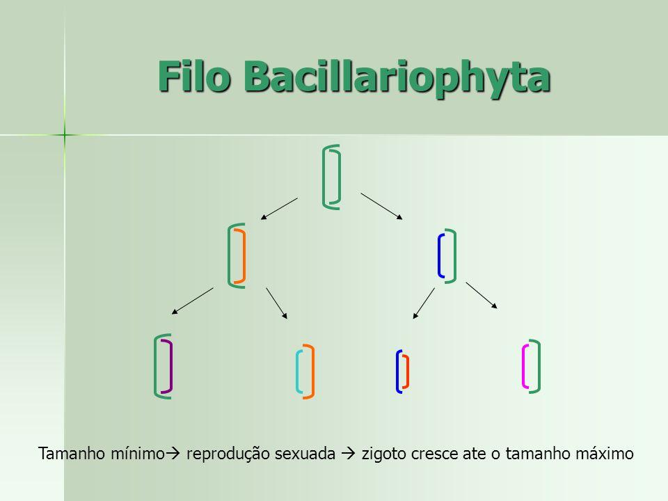 Filo Bacillariophyta Tamanho mínimo reprodução sexuada  zigoto cresce ate o tamanho máximo