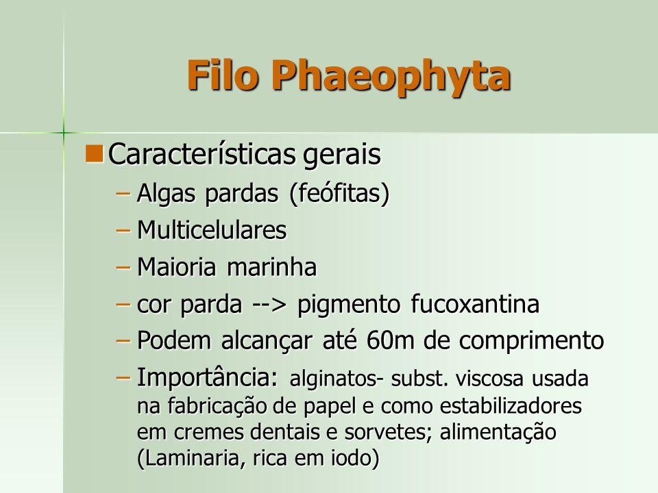 Filo Phaeophyta Características gerais Algas pardas (feófitas)