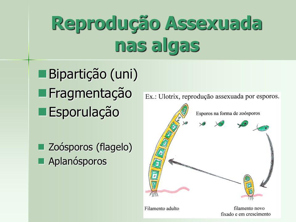 Reprodução Assexuada nas algas