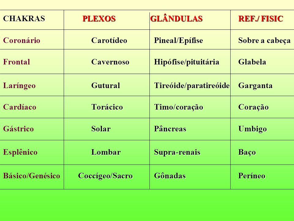 CHAKRAS PLEXOS GLÂNDULAS REF./ FISIC