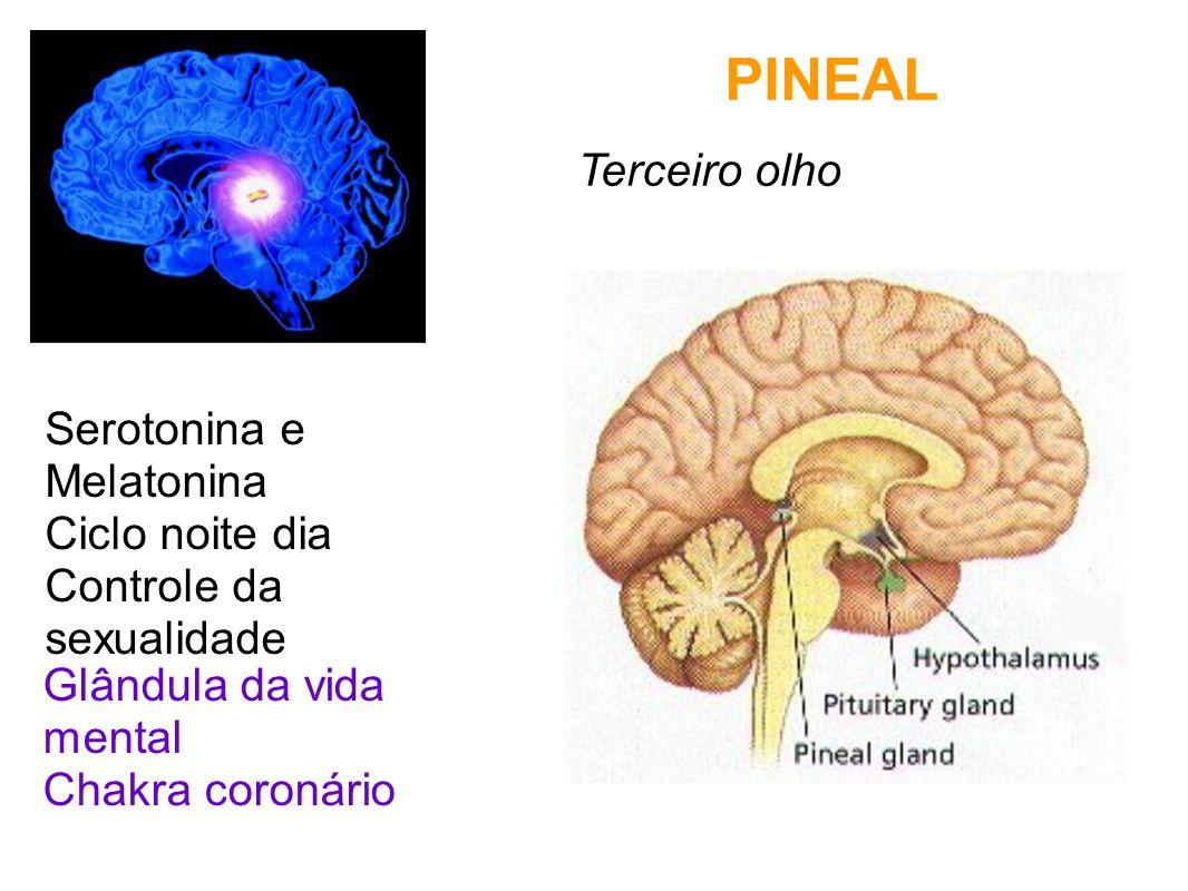 PINEAL Terceiro olho Serotonina e Melatonina Ciclo noite dia