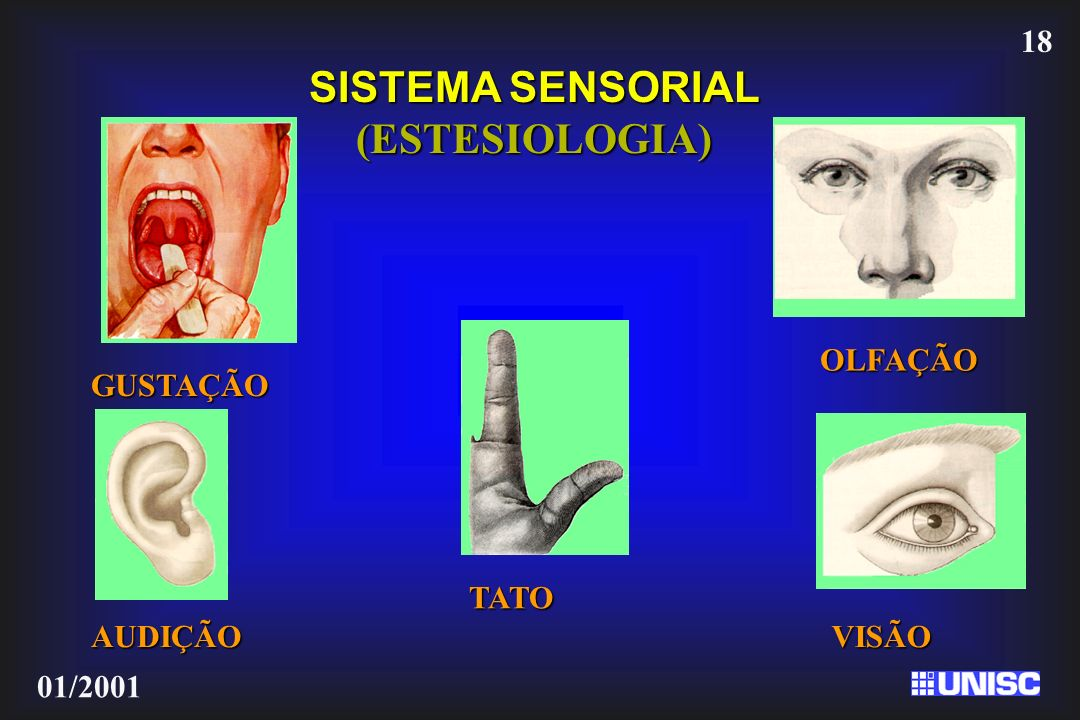 SISTEMA SENSORIAL (ESTESIOLOGIA)