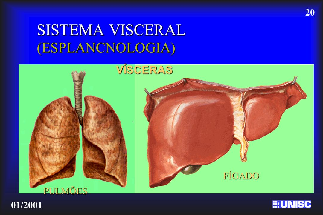 SISTEMA VISCERAL (ESPLANCNOLOGIA)