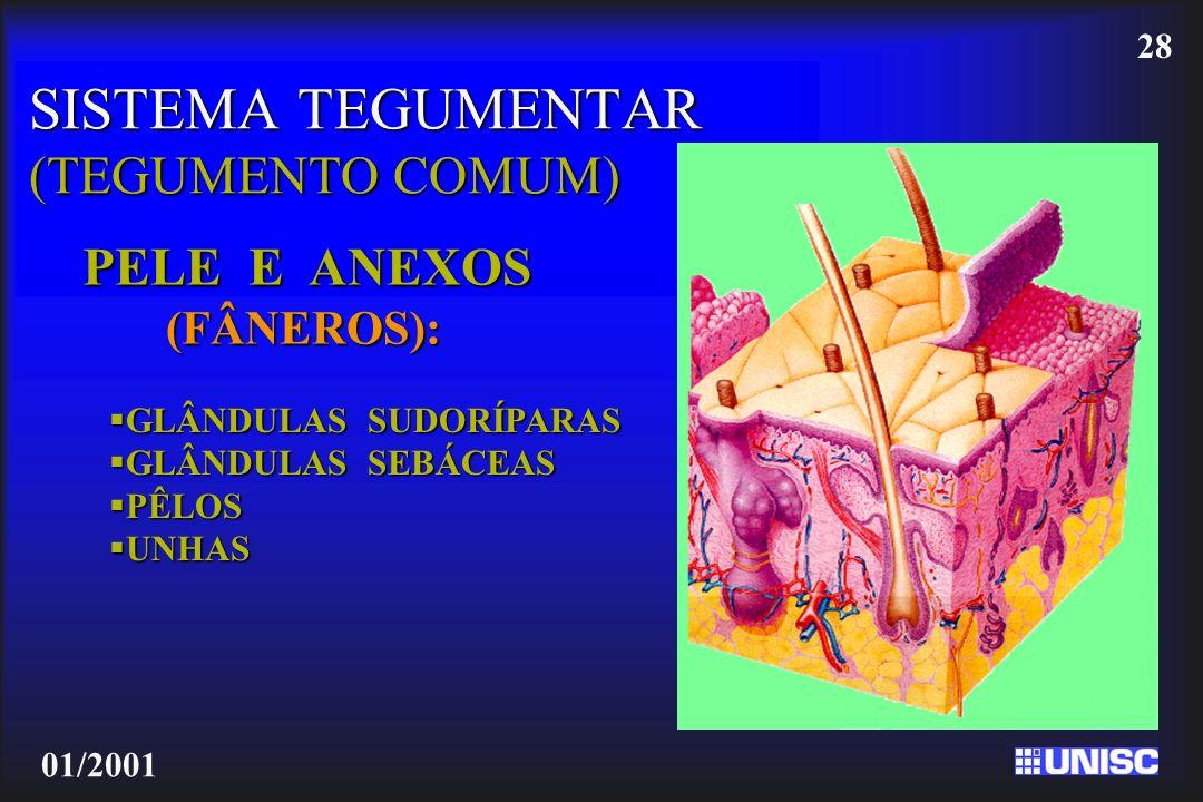 SISTEMA TEGUMENTAR (TEGUMENTO COMUM)
