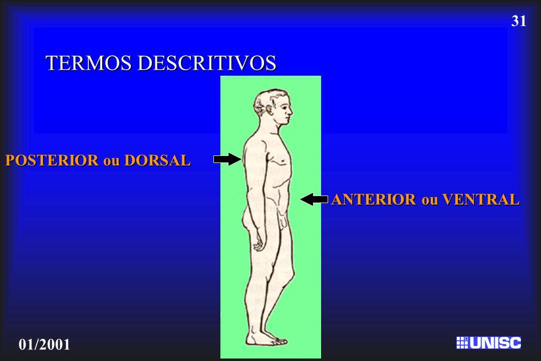 TERMOS DESCRITIVOS POSTERIOR ou DORSAL ANTERIOR ou VENTRAL