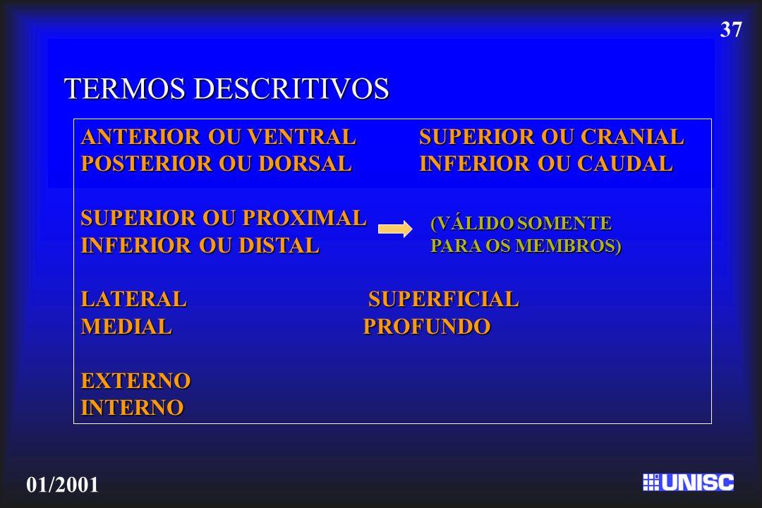 TERMOS DESCRITIVOS ANTERIOR OU VENTRAL SUPERIOR OU CRANIAL