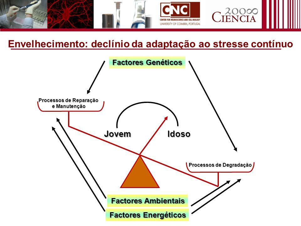 Envelhecimento: declínio da adaptação ao stresse contínuo