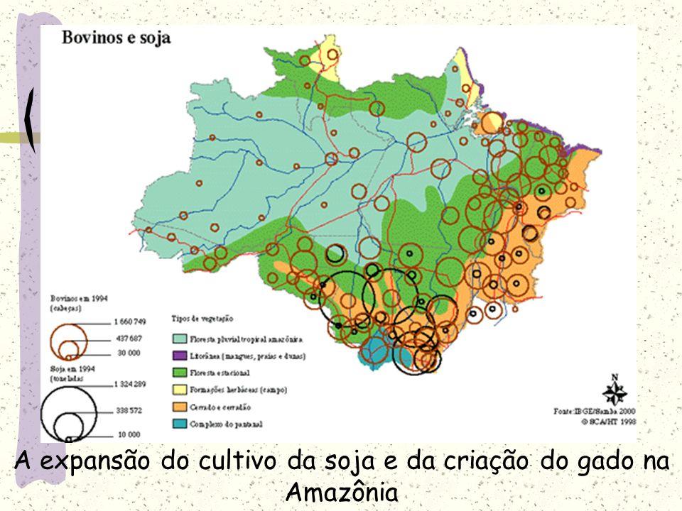 A expansão do cultivo da soja e da criação do gado na Amazônia