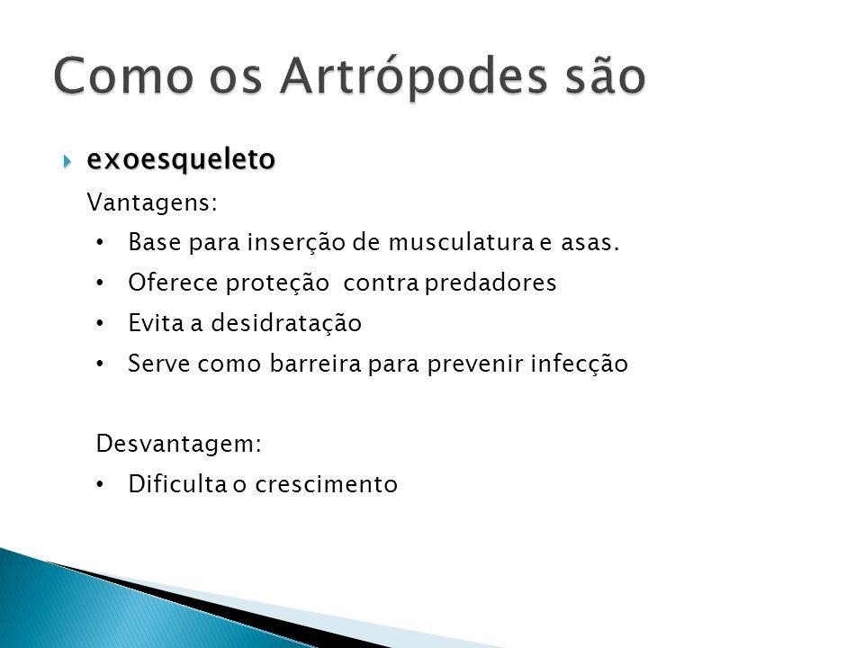 Como os Artrópodes são exoesqueleto Vantagens: