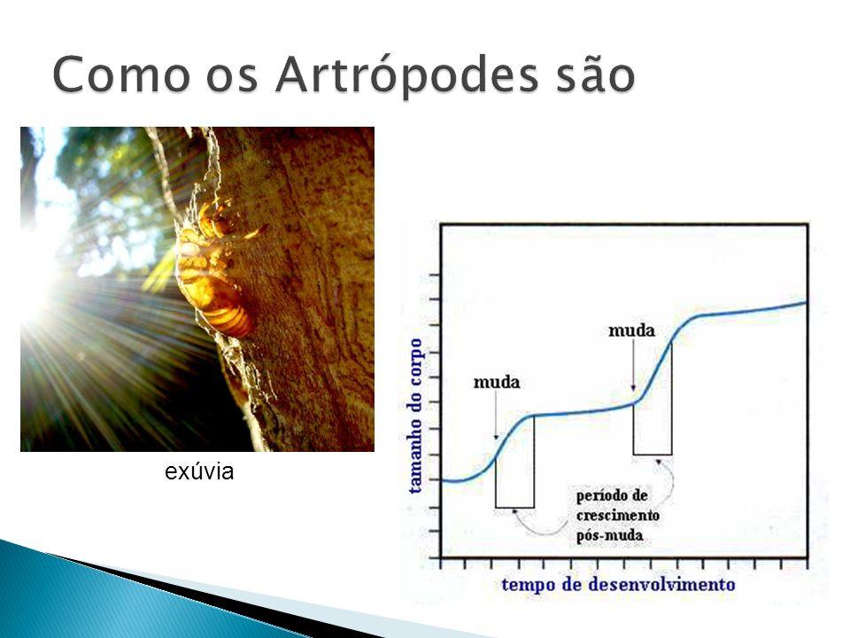 Como os Artrópodes são exúvia