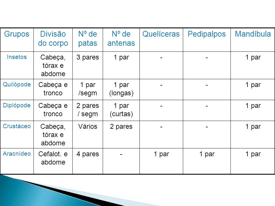 Grupos Divisão do corpo Nº de patas Nº de antenas Quelíceras