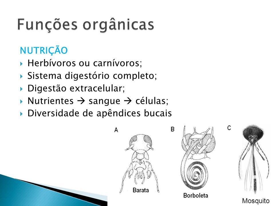 Funções orgânicas NUTRIÇÃO Herbívoros ou carnívoros;