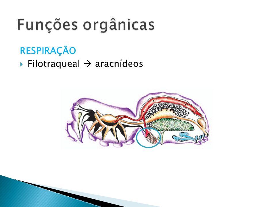 Funções orgânicas RESPIRAÇÃO Filotraqueal  aracnídeos