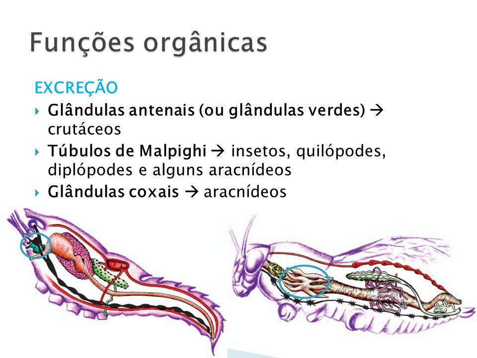Funções orgânicas EXCREÇÃO