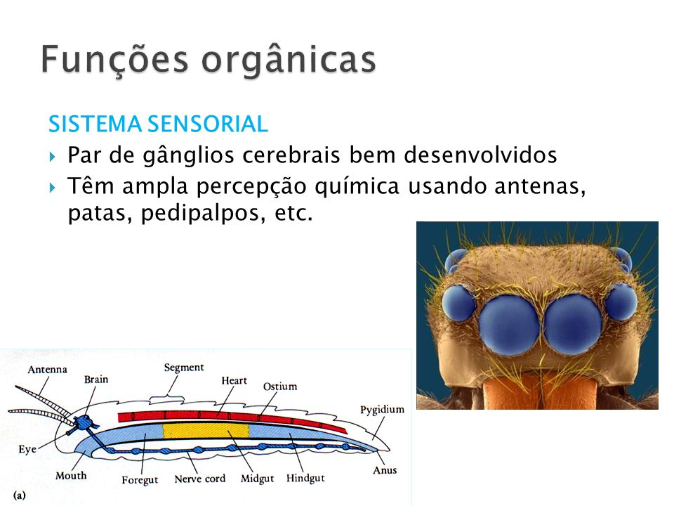 Funções orgânicas SISTEMA SENSORIAL