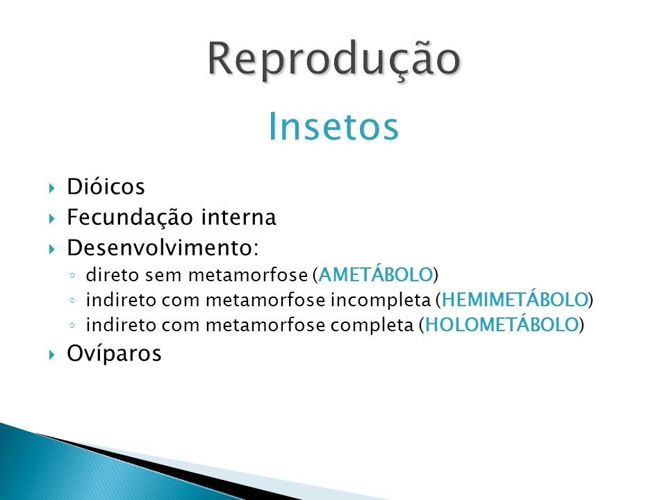 Reprodução Insetos Dióicos Fecundação interna Desenvolvimento: