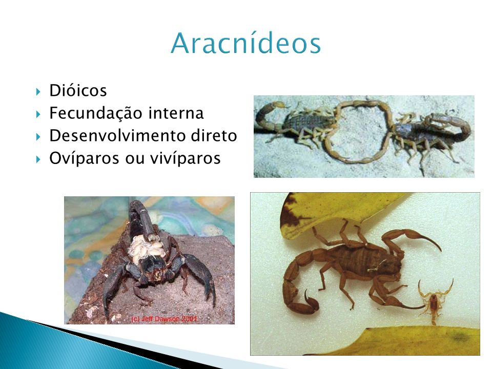 Aracnídeos Dióicos Fecundação interna Desenvolvimento direto