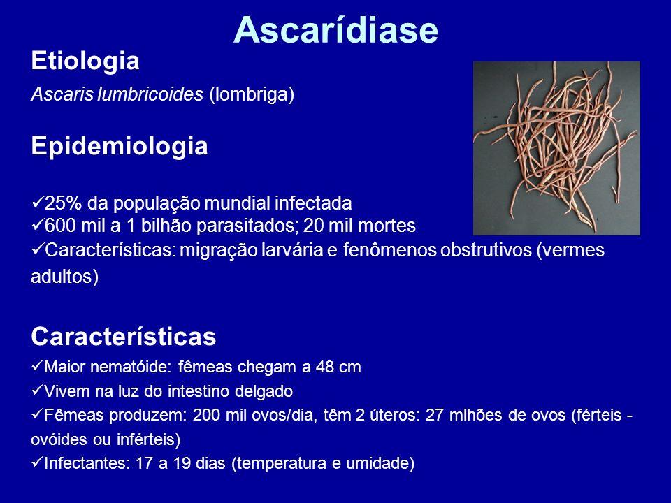 Ascarídiase Etiologia Epidemiologia Características