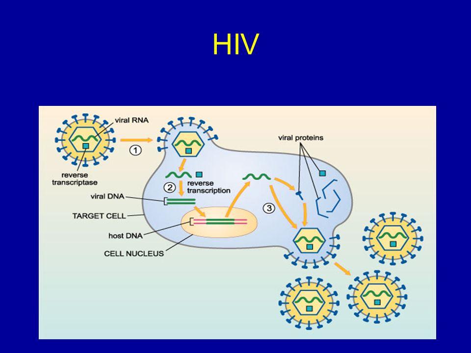 HIV Ciclo
