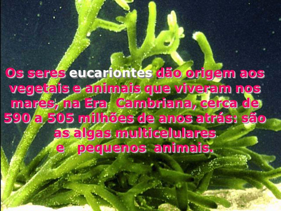 Os seres eucariontes dão origem aos vegetais e animais que viveram nos mares, na Era Cambriana, cerca de 590 a 505 milhões de anos atrás: são as algas multicelulares