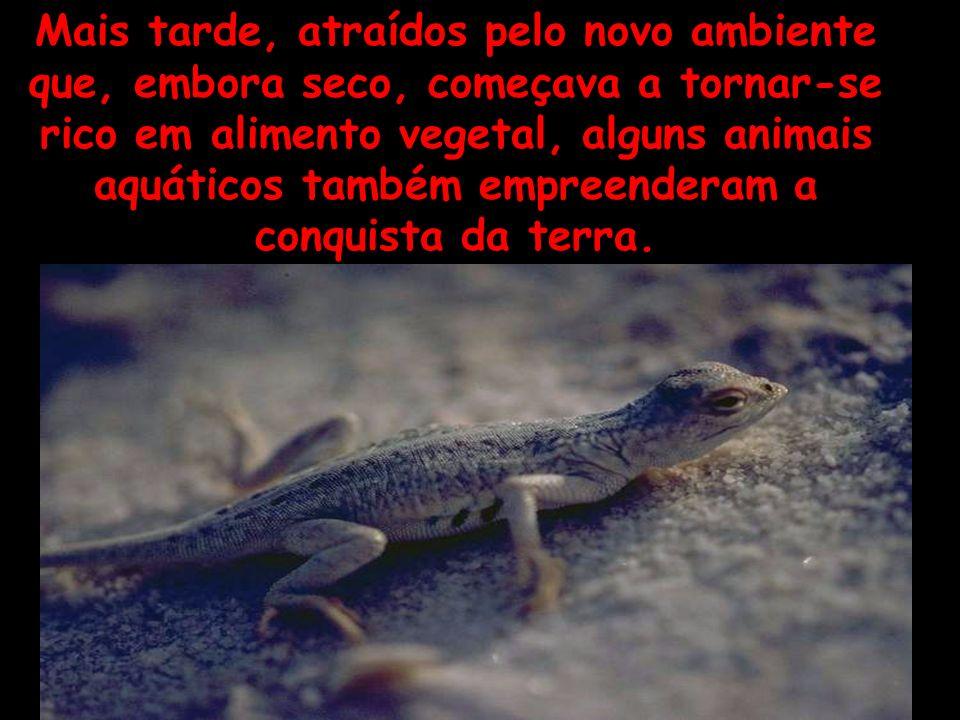 Mais tarde, atraídos pelo novo ambiente que, embora seco, começava a tornar-se rico em alimento vegetal, alguns animais aquáticos também empreenderam a conquista da terra.