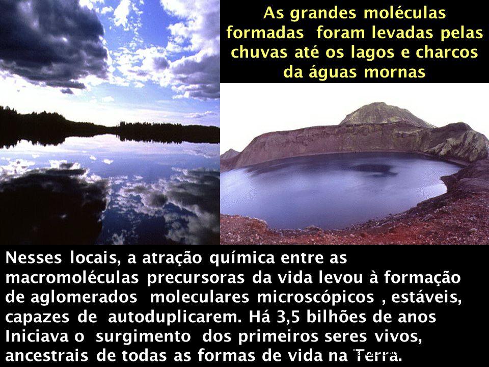 As grandes moléculas formadas foram levadas pelas chuvas até os lagos e charcos da águas mornas