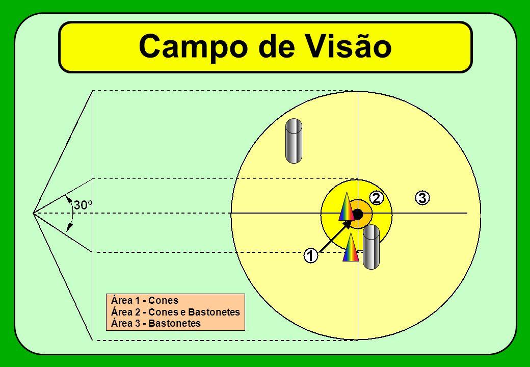 Campo de Visão Área 1 - Cones Área 2 - Cones e Bastonetes