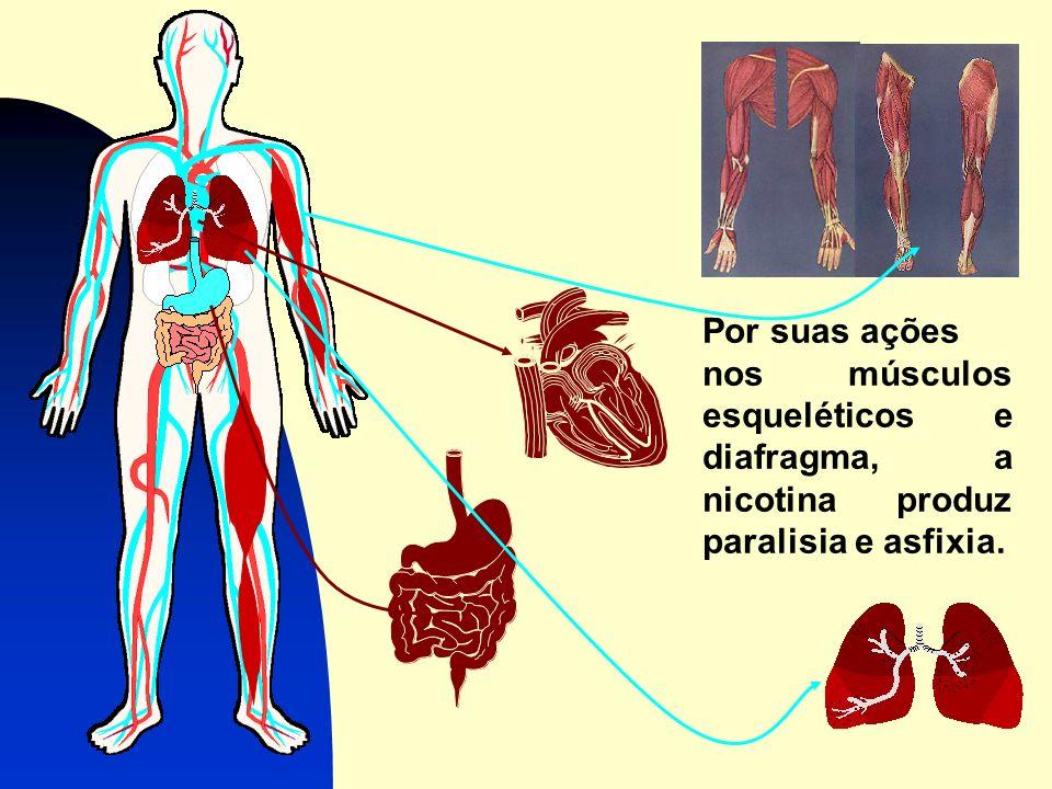 Por suas ações nos músculos esqueléticos e diafragma, a nicotina produz paralisia e asfixia.