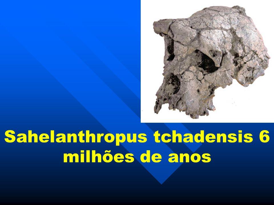 Sahelanthropus tchadensis 6 milhões de anos
