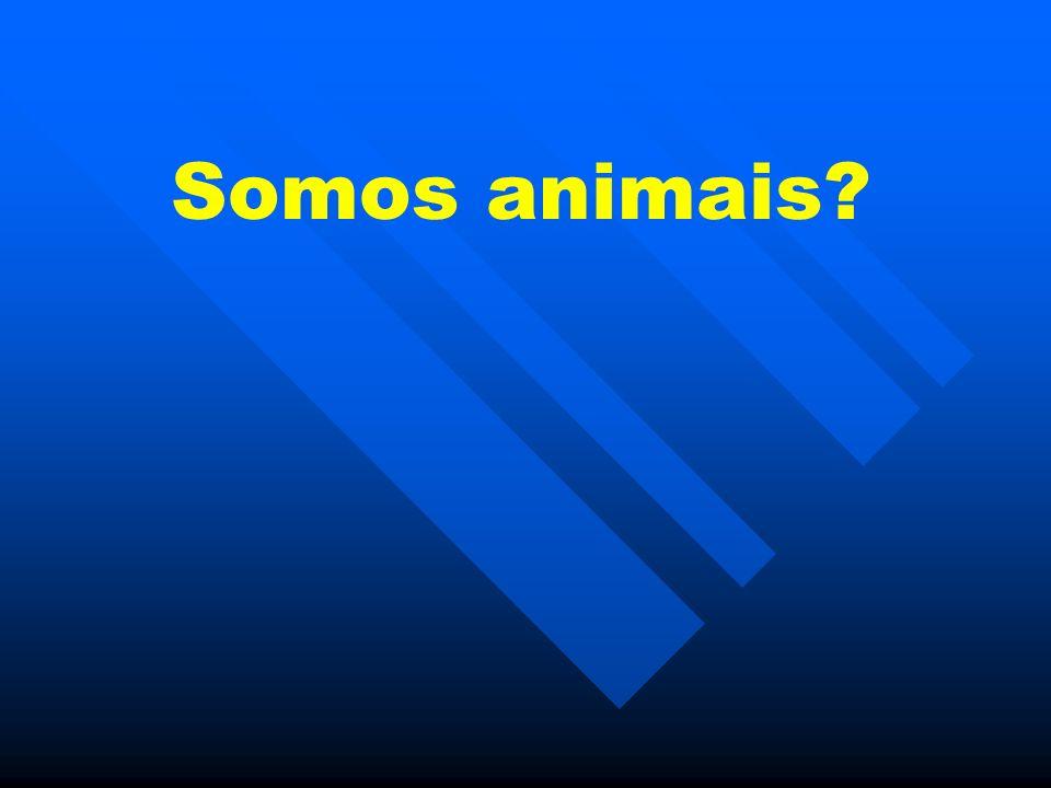 Somos animais