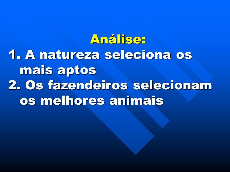 Análise: A natureza seleciona os mais aptos Os fazendeiros selecionam os melhores animais
