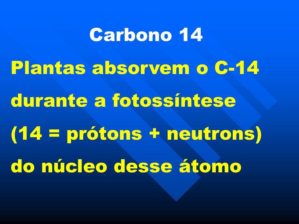 Carbono 14 Plantas absorvem o C-14. durante a fotossíntese.