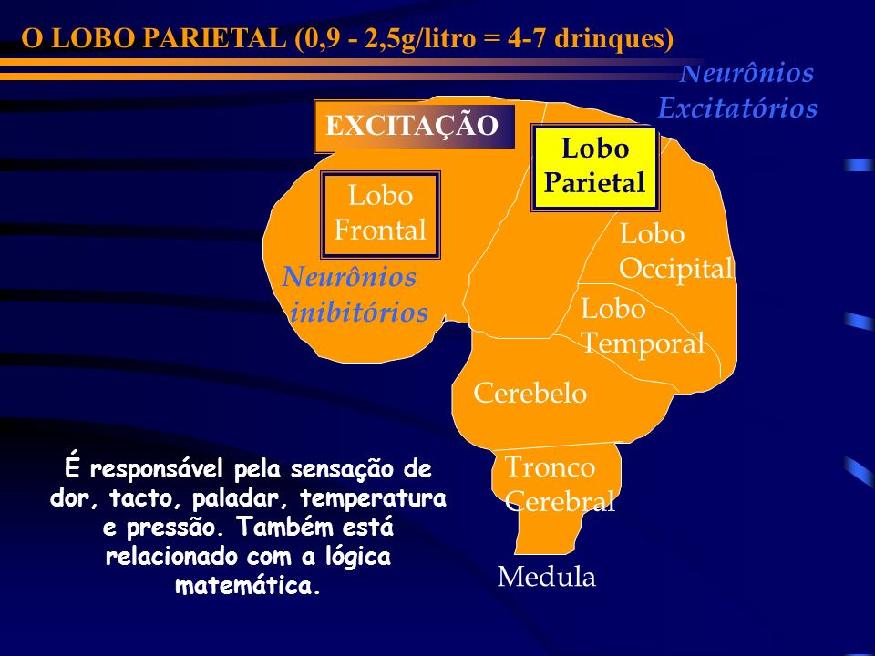 O LOBO PARIETAL (0,9 - 2,5g/litro = 4-7 drinques) Neurônios