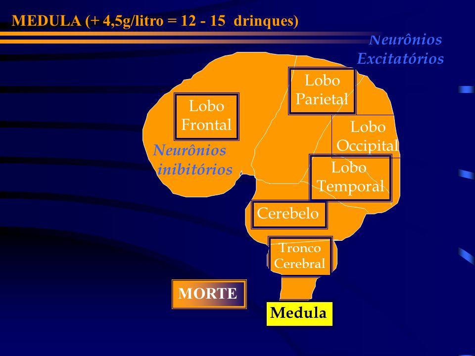 MEDULA (+ 4,5g/litro = 12 - 15 drinques) Neurônios Excitatórios