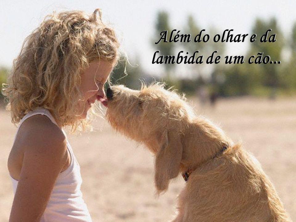 Além do olhar e da lambida de um cão...