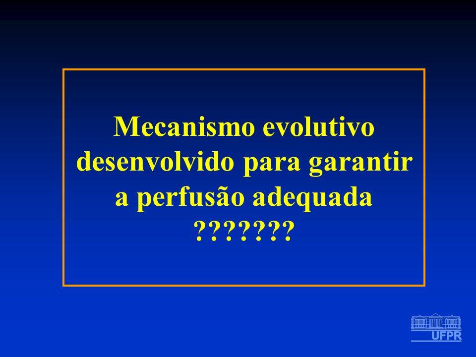 Mecanismo evolutivo desenvolvido para garantir a perfusão adequada